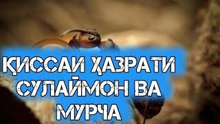 ҚИССАИ ҲАЗРАТИ СУЛАЙМОН ВА МУРЧА!