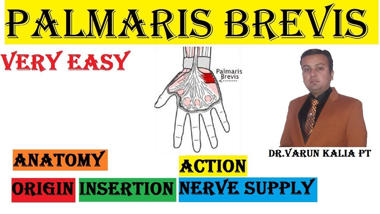 Palmaris Brevis Muscle Anatomy By Dr Varun Kalia PT - YouTube