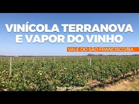 Vinícola Terranova e Vapor do Vinho, Vale do São Francisco, turismo vinhos no rio São Francisco