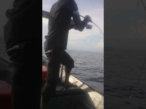 Jigging tenggiri 15.8kg pulau tenggol