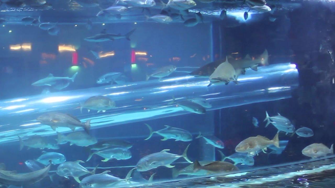 Golden Nugget Las Vegas Shark Water Slide
