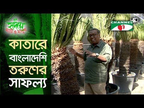 Bangladeshi's Gardening Initiative in Qatar | কাতার সবুজায়নে