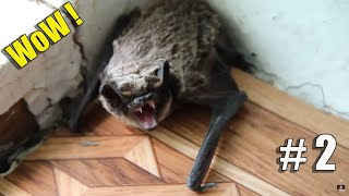 The most incredible cases of wild animals invading people's homes #2