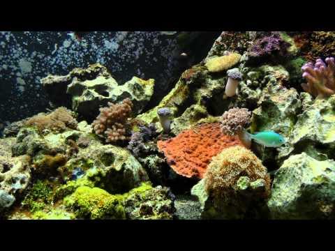 4K UHD Ultra High Definition Aquarium 20min + Musik