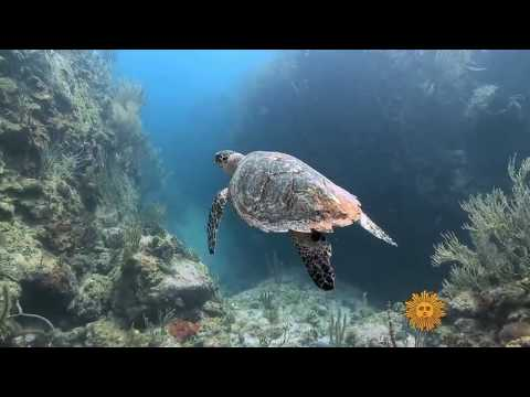 Nature Marine life of the U S  Virgin Islands