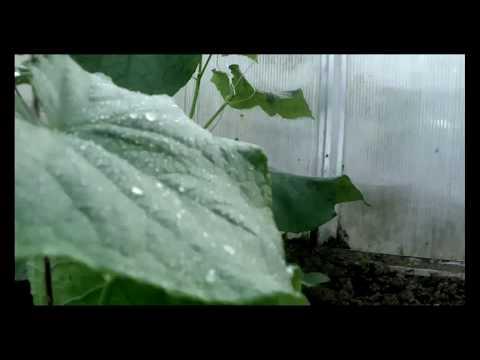 Система капельного полива. Как работает система капельного полива в теплице своими руками. Беларусь