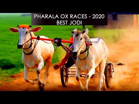 NO.1 ਬਲਦਾਂ ਦੀ ਜੋੜੀ at PHARALA OX RACES - 2020