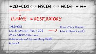 Bicarbonate Buffer System and pH Imbalances