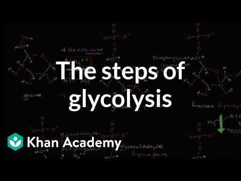 Steps of glycolysis | Cellular respiration | Biology | Khan Academy