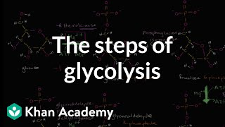 Steps of glycolysis