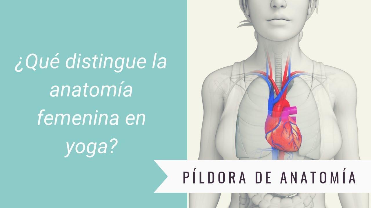 Píldora de anatomía - Anatomía femenina y yoga - YouTube