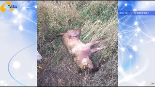 Полтавці у полі знайшли труп собаки
