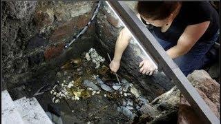 Phát hiện chấn động giới khảo cổ: X.á.c chó sói phủ đầy vàng ròng...