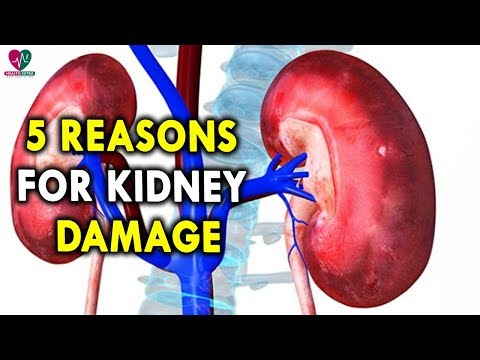 5 Reasons For Kidney Damage - Best Health Tips for Men and Womens