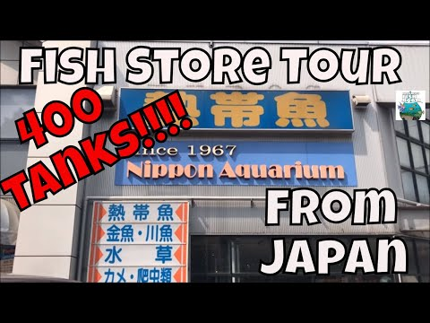 Fish Store Tour From Japan *OVER 400* Tanks And An Interview With An Employee!!!! ADA Store