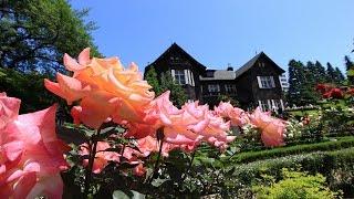 この庭園はもと明治の元勲・陸奥宗光の邸宅でしたが、次男が古河家の養...