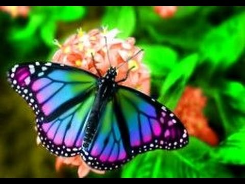 Flowers and Butterflies Relaxing Music - YouTube  Flowers and But...