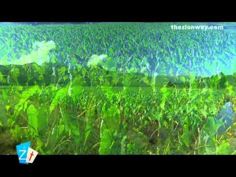 Nithya Snehathal _ Malayalam Christian Song