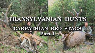 Transylvanian Hunts Carpathian Red Stags Part 1 - Trailer