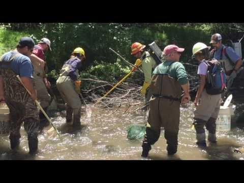 Fish Rescue On Whychus Creek