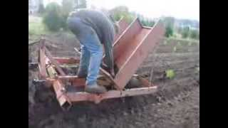 Planting Cryptomeria Japonica In The Field      With A Tree Planter