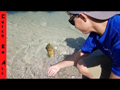 EASIEST WAY TO CATCH PEACOCK BASS In FLORIDA