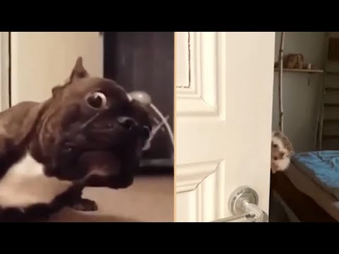 🤣 Funniest Animals🐶😻 – Awesome Funny Pet and Wild Animals Videos Compilation 2020 😇 Try not Laugh#21