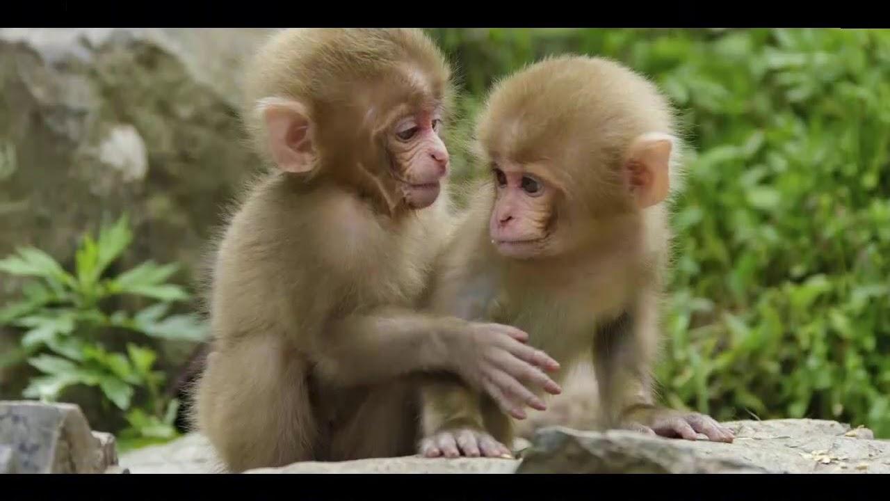Baby Einstein World Animals 2002 Animals In The Jungle