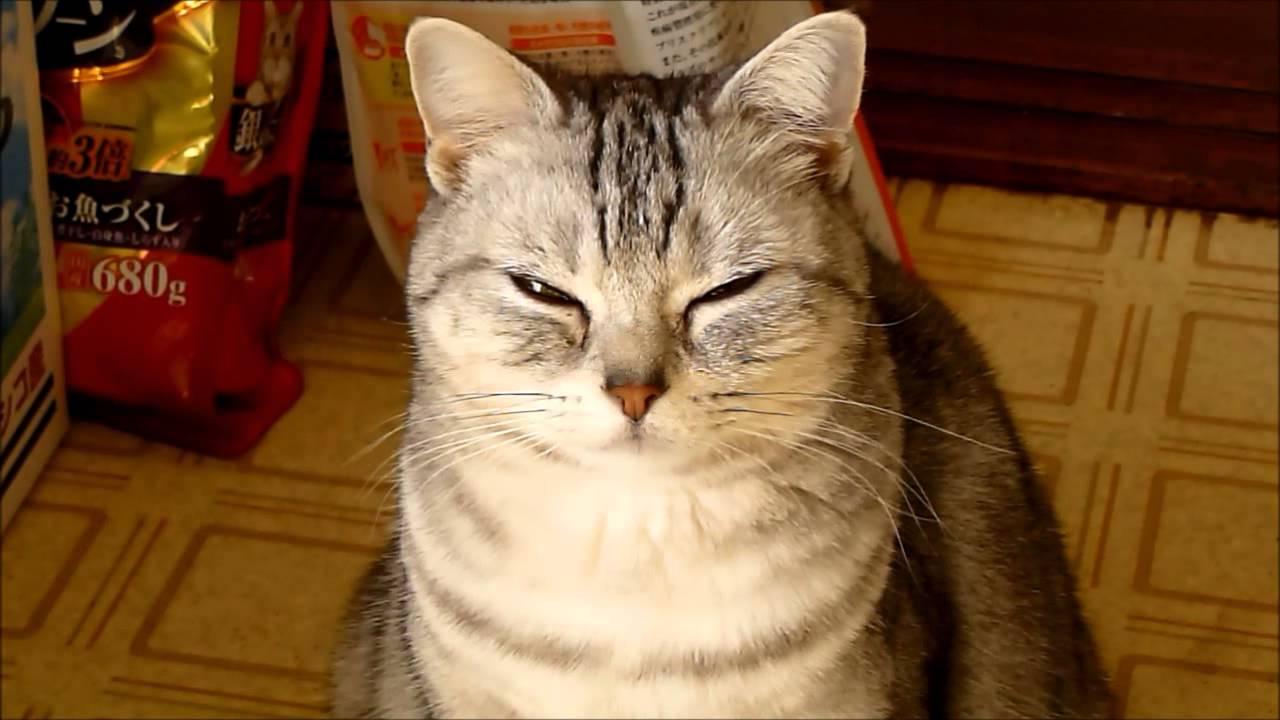 笑う猫画像