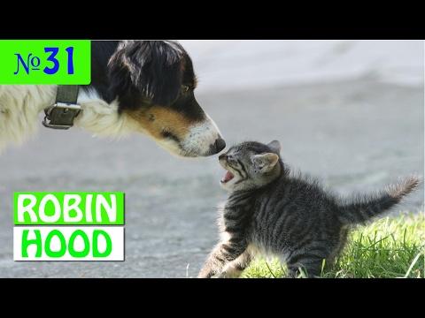 ПРИКОЛЫ 2017 с животными. Смешные Коты, Собаки, Попугаи // Funny Dogs Cats Compilation. Февраль №31