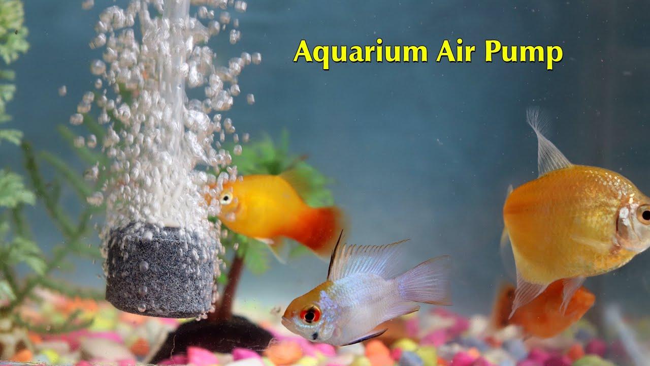 Aquarium Air Pump | DIY Craft Master