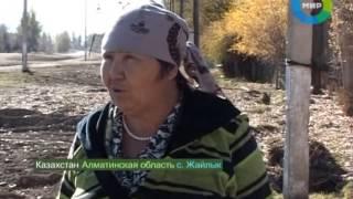 Сибирская язва в Казахстане. Эфир 4.11.2012