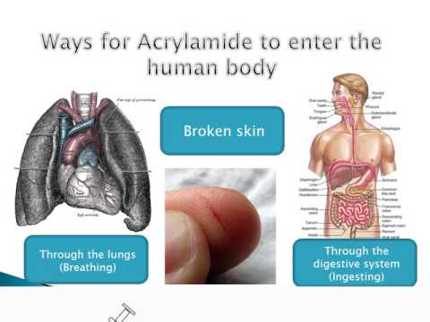 The effects of Acrylamide