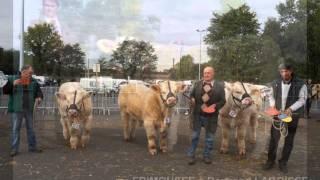 concours d'animaux reproducteurs charolais Montluçon 2010