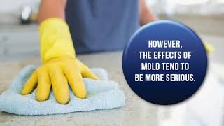 Triangle Legacy Difference Between Mold and Mildew