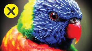 10 Animales más inteligentes del mundo