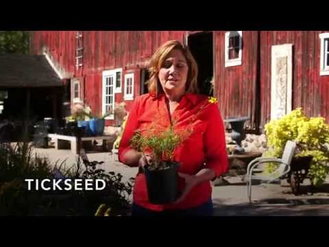 Best low-growing plants? Grow Smart - featuring Melinda Myers