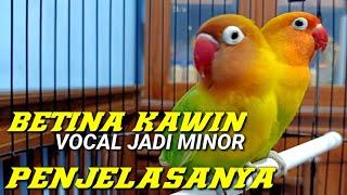 Download lagu LOVEBIRD BETINA BUTUH KAWIN JIKA INGIN BIRAHINYA STABIL