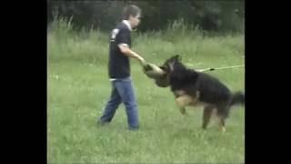 """Училище за кучета. Обучение на кучета """"K9 World"""""""