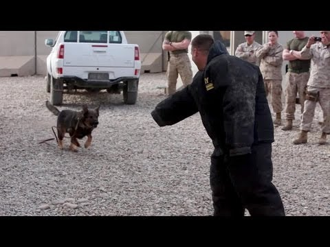Military Working Dogs Demo - U.S. Marine Corps 1st Law Enforcement Battalion.