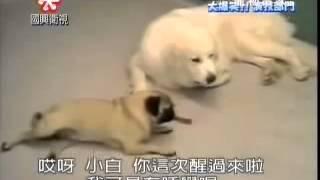 stealing dog