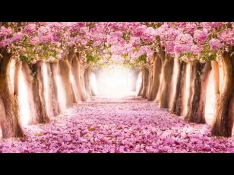 Beautiful Romantic Music Relaxing Music, Piano Music, Violin Music, Guitar Music, Sleep Music ★101