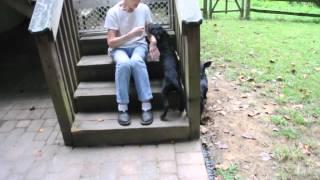 Rescue Pups - 3.5 Months Old - Retriever Hound Doberman Mix Puppies?