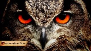 Птица #Сова: мудрость, интеллект и магия