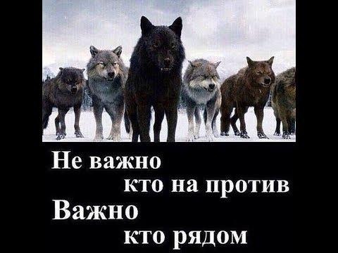 Волк внутри нас