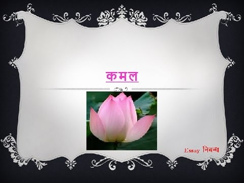 Lotus flower facts for kids best white flowers white flowers interesting facts about the lotus temple just fun facts lotus temple essay on indian national flower lotus essay on lotus flower for kids in hindi national mightylinksfo