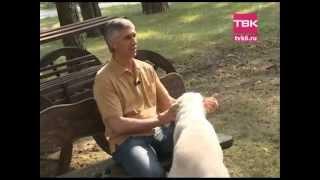 Очень важные животные. 50 собак Анатолия Быкова