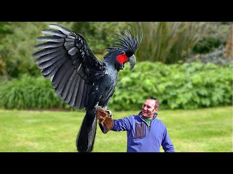 10 Самых Дорогих Птиц в Мире