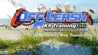 Dogs Enjoying The Beach! Off Leash Obedience Guaranteed At Lowcountry Dog Trainers