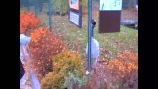 японский журавль Рижский зоопарк 1 ноября 2011